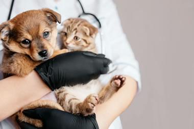 banner-pos-graduacao-clinica-medica-veterinaria-pequenos-animais-2-1